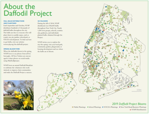 The centerfold image of the 2019 Blooming Pamphlet with a map showing all the reported blooms from plantings done through the 2018 season of The Daffodil Project.