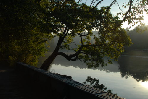 Van Cortlandt Park in the Bronx. Picture provided by the Natural Areas Conservancy.