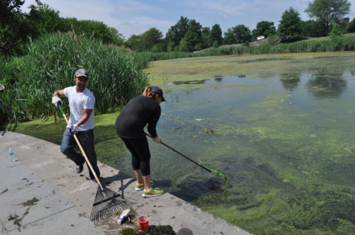 Volunteers participate in a lake clean up in Crotona Park in the Bronx
