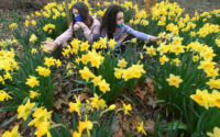 NY4P in the New York Post: NYC's yellow ribbon of 8 million daffodils a living memorial to 9/11