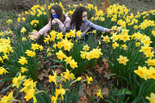 Local girls sit around daffodils in Harlem's Morningside Park on March 31, 2021. Photo by Helayne Seidman