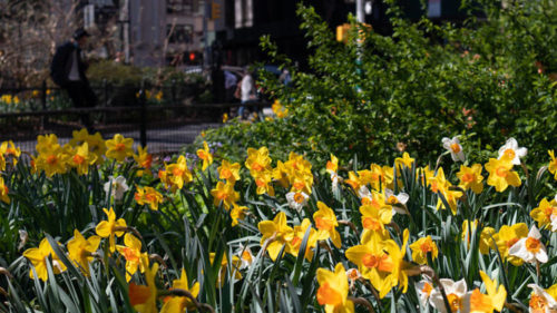 The annual citywide event will be double the size of last year's planting.